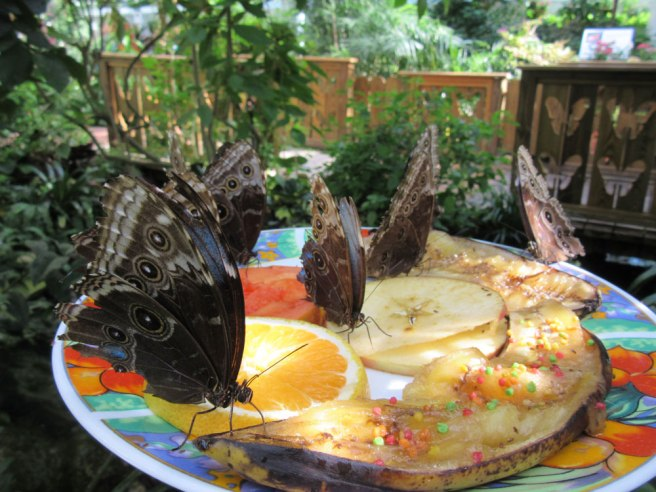 butterflies-Key-West-Butterfly-and-Nature-Conservatory