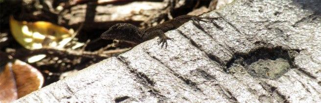 salamander_amerika
