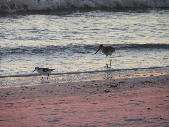 best beach st pete's beach florida birds
