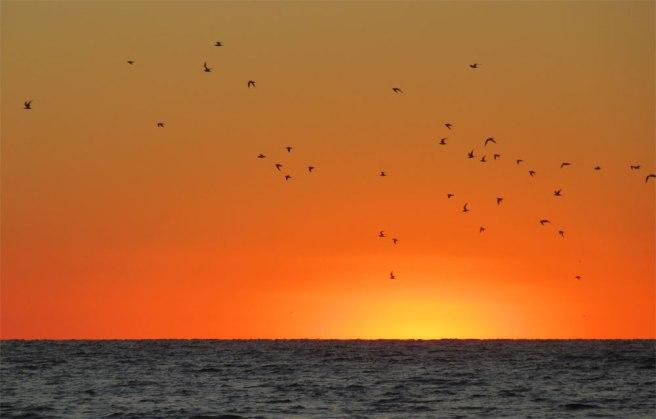 Vogels en zonsondergang op het strand van Florida